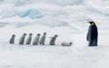 『コウテイペンギンの学校』南極スノー・ヒル島.