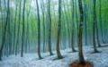 美人林の名残雪
