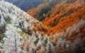 -「霧氷と紅葉のカラマツ林」長野, 松本.