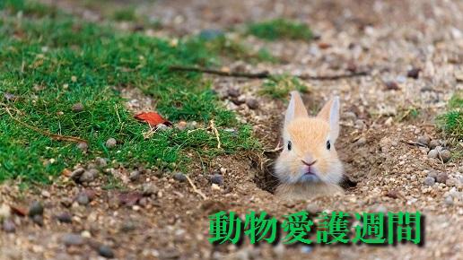 f:id:akaibara:20190920221911j:plain