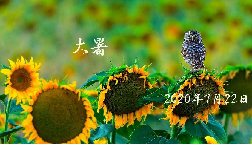 f:id:akaibara:20200722214124j:plain