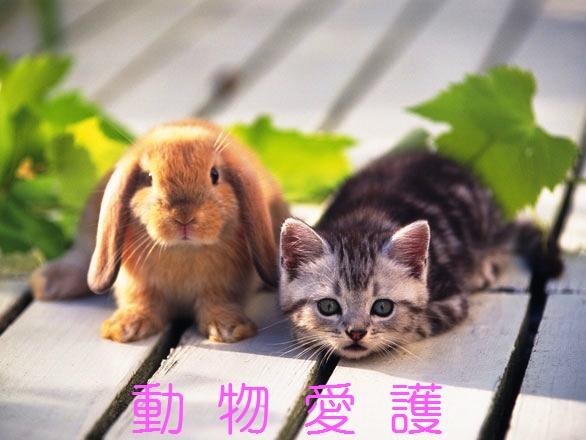 f:id:akaibara:20200924172732j:plain