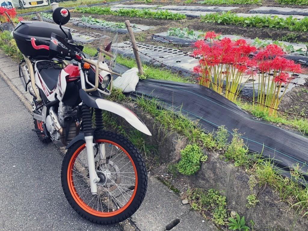 f:id:akasakaki:20191008230344j:plain