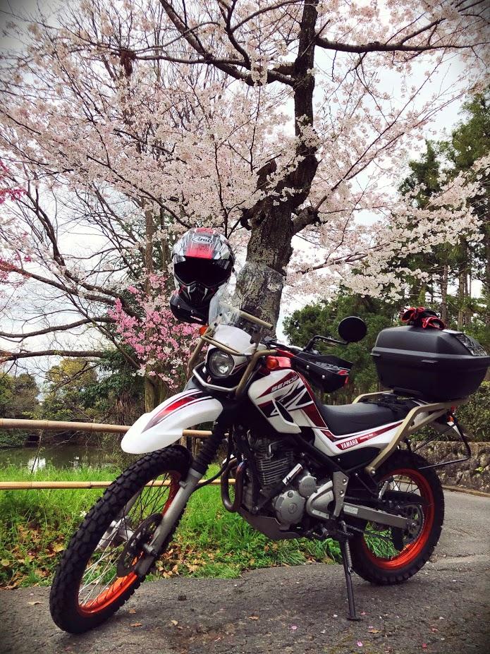 f:id:akasakaki:20200401000813j:plain