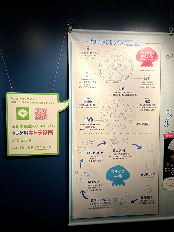 f:id:akasakaki:20201223210556j:plain