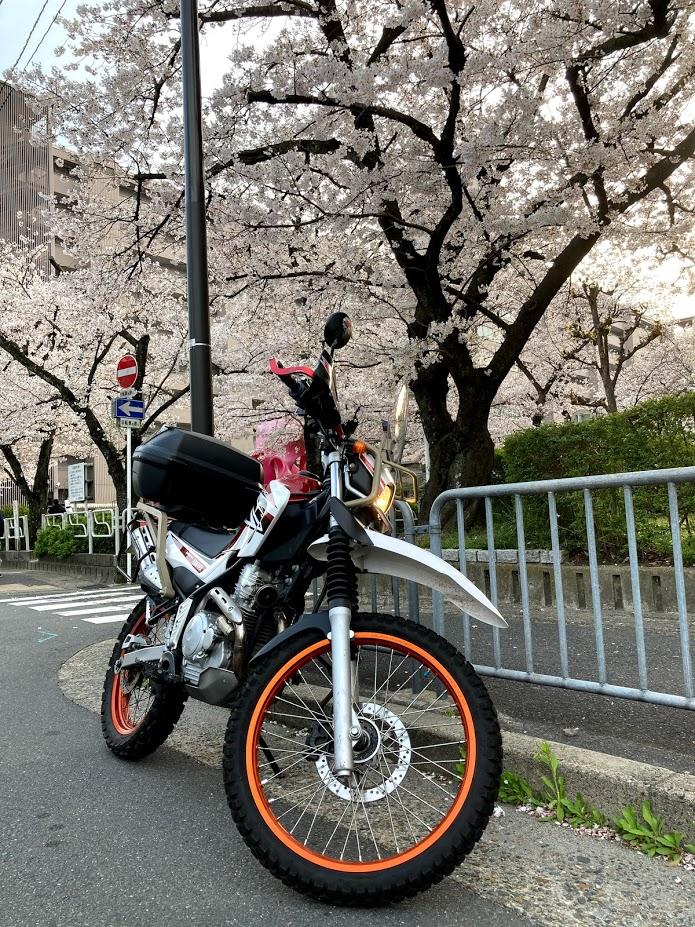 f:id:akasakaki:20210327203438j:plain