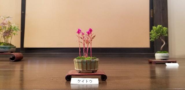 f:id:akashiaya:20181117221127j:image