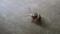 アカスジキンカメの赤ちゃん