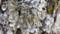 梅ノ樹木毛