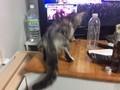 おもしろ猫