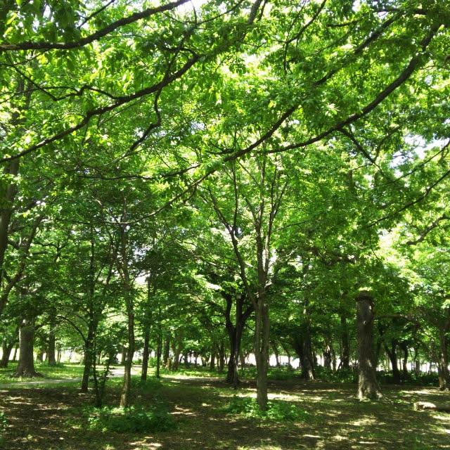 大学村の森