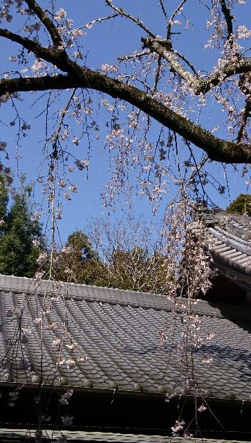 f:id:aki-syumi122:20200321151422j:image