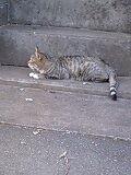 f:id:aki_123:20090920160911j:image