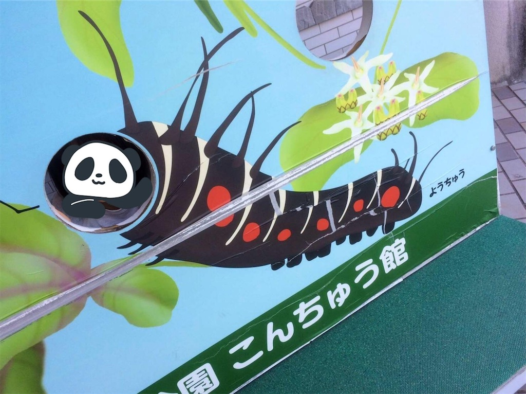 f:id:aki_tokitamago:20200318183822j:image