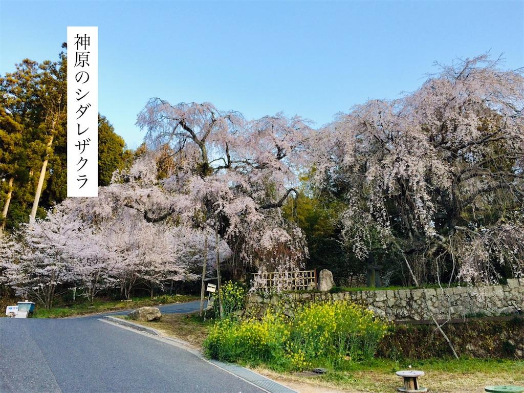 f:id:aki_tokitamago:20200408205930j:image