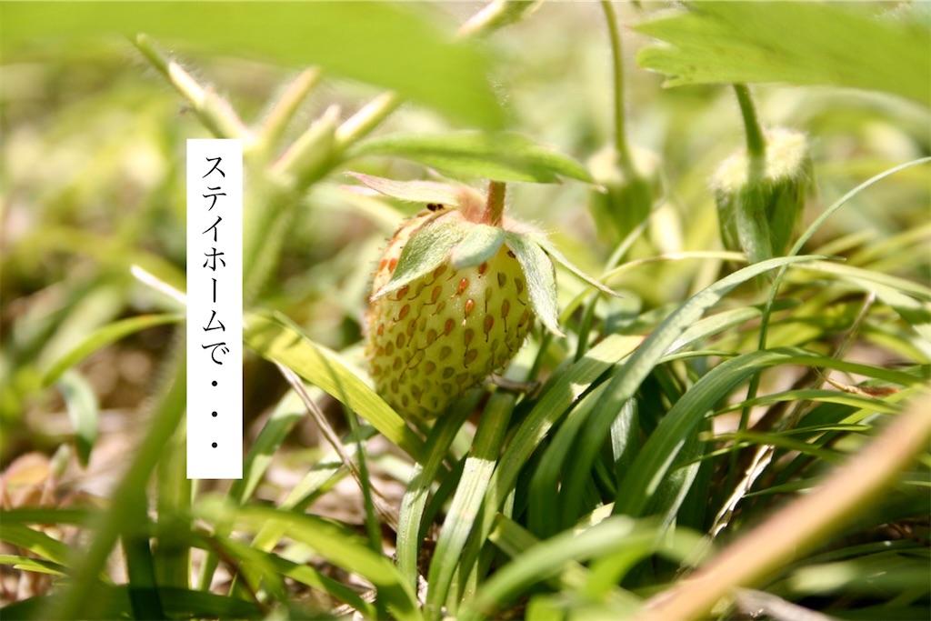 f:id:aki_tokitamago:20200618160746j:image