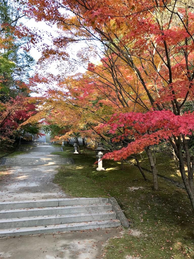 f:id:aki_tokitamago:20200627085020j:image