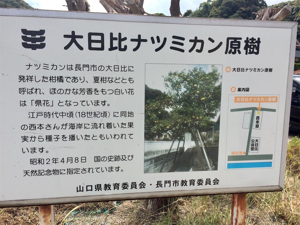 f:id:aki_tokitamago:20200706192509j:image