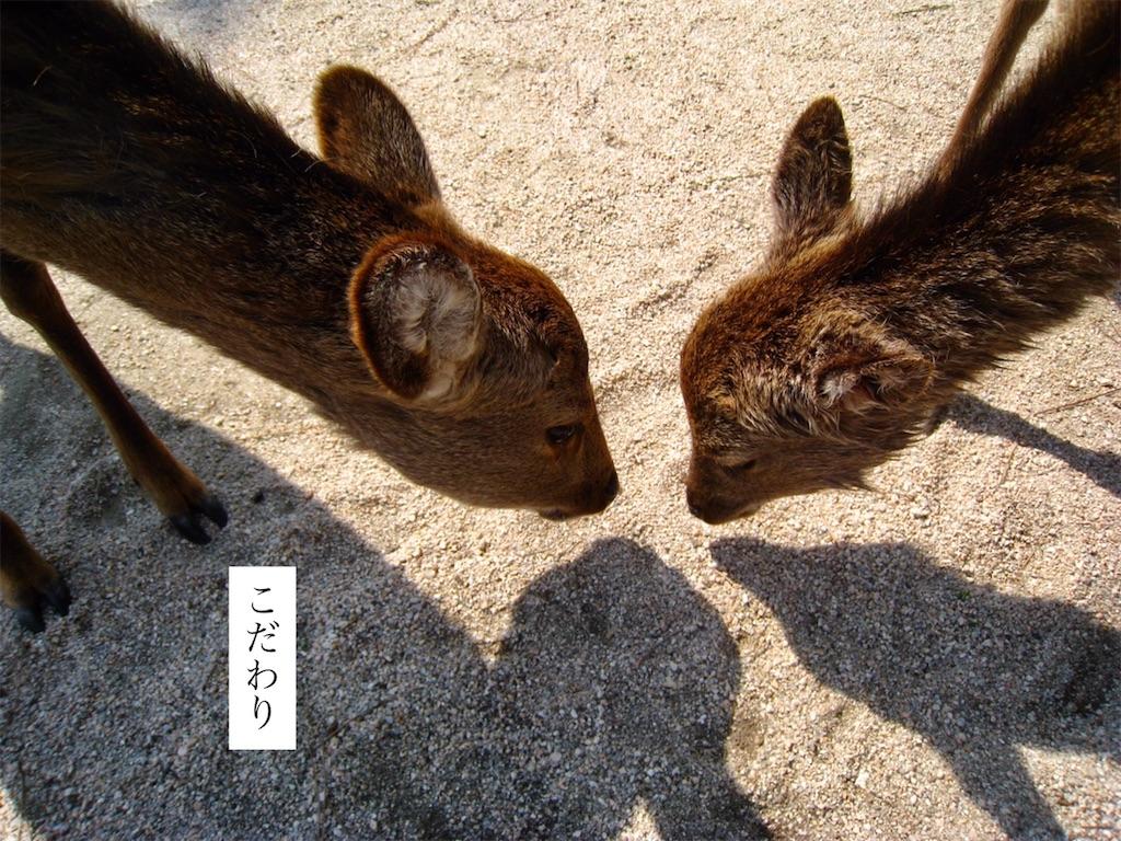 f:id:aki_tokitamago:20200717163212j:image