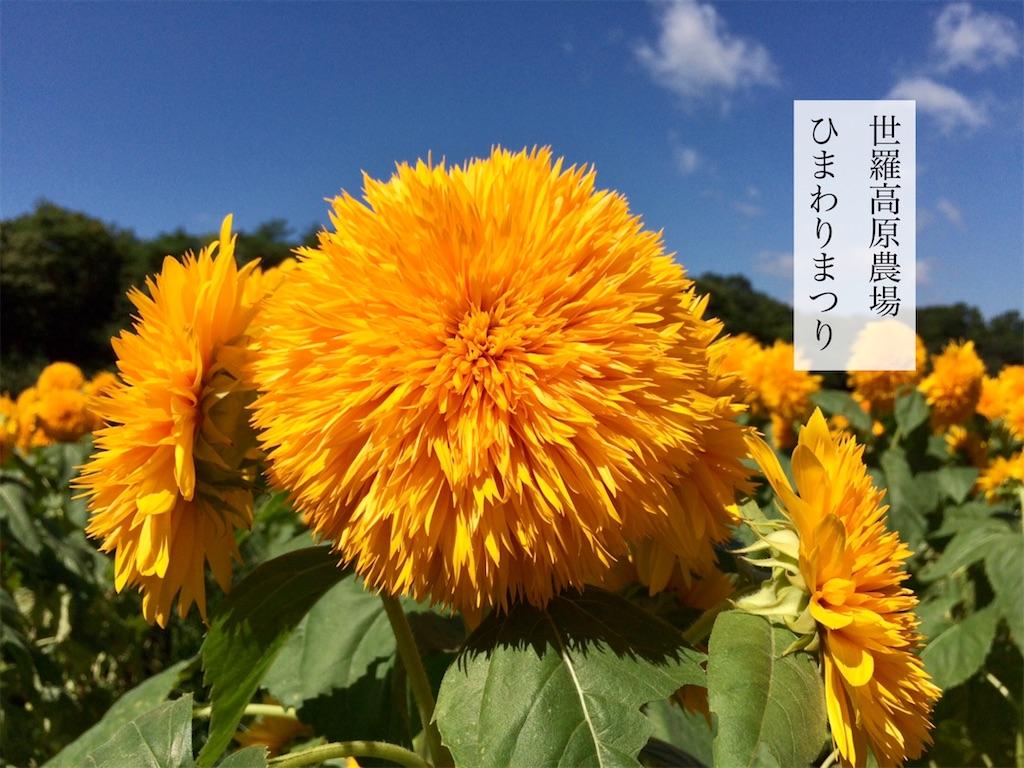 f:id:aki_tokitamago:20200815214918j:image