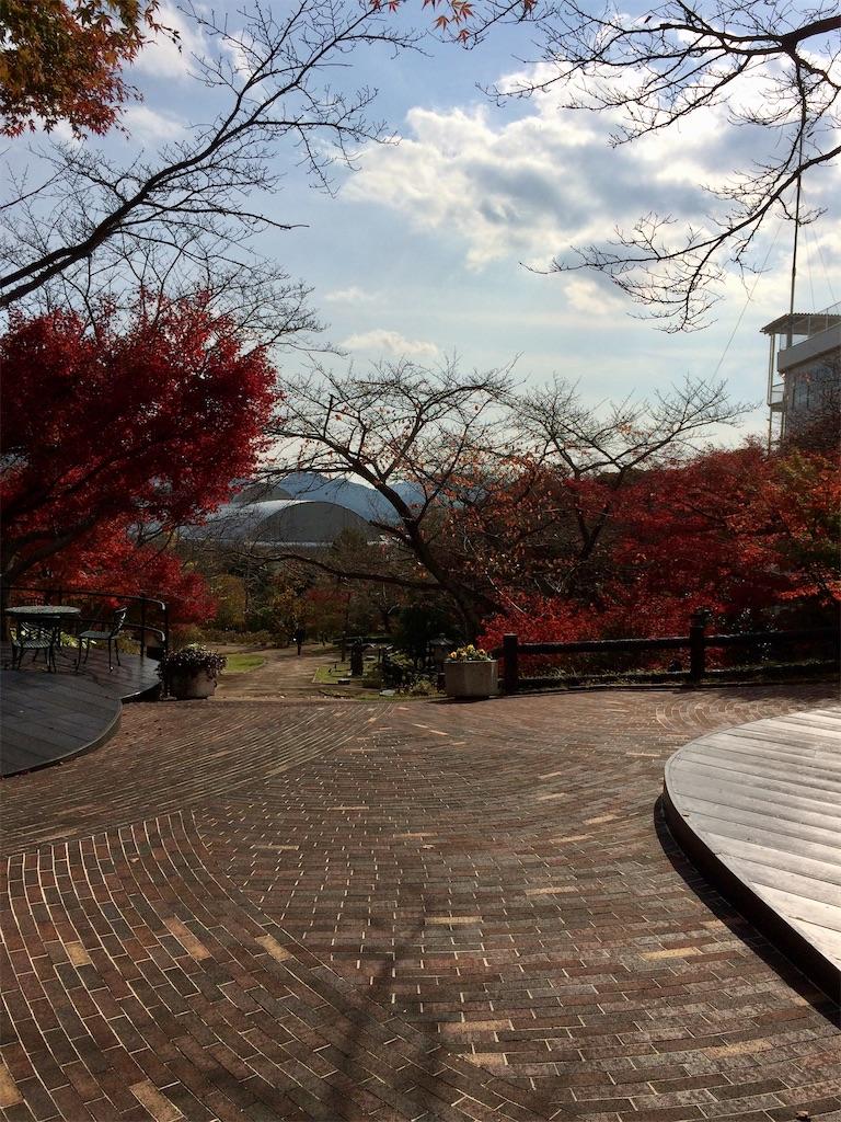 f:id:aki_tokitamago:20210628232949j:image