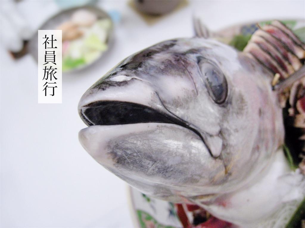 f:id:aki_tokitamago:20210816082019j:image