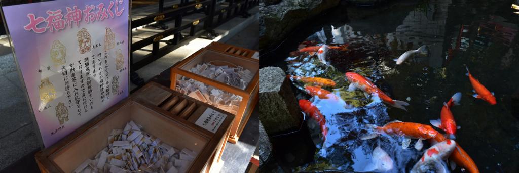 來宮神社の鯉