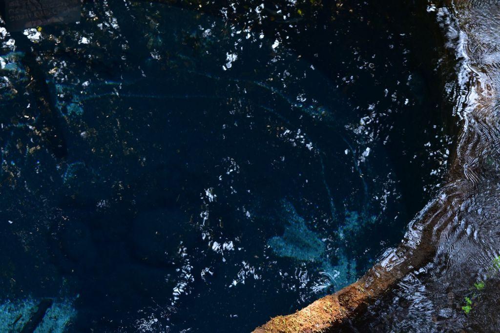 柿田川公園の湧き水
