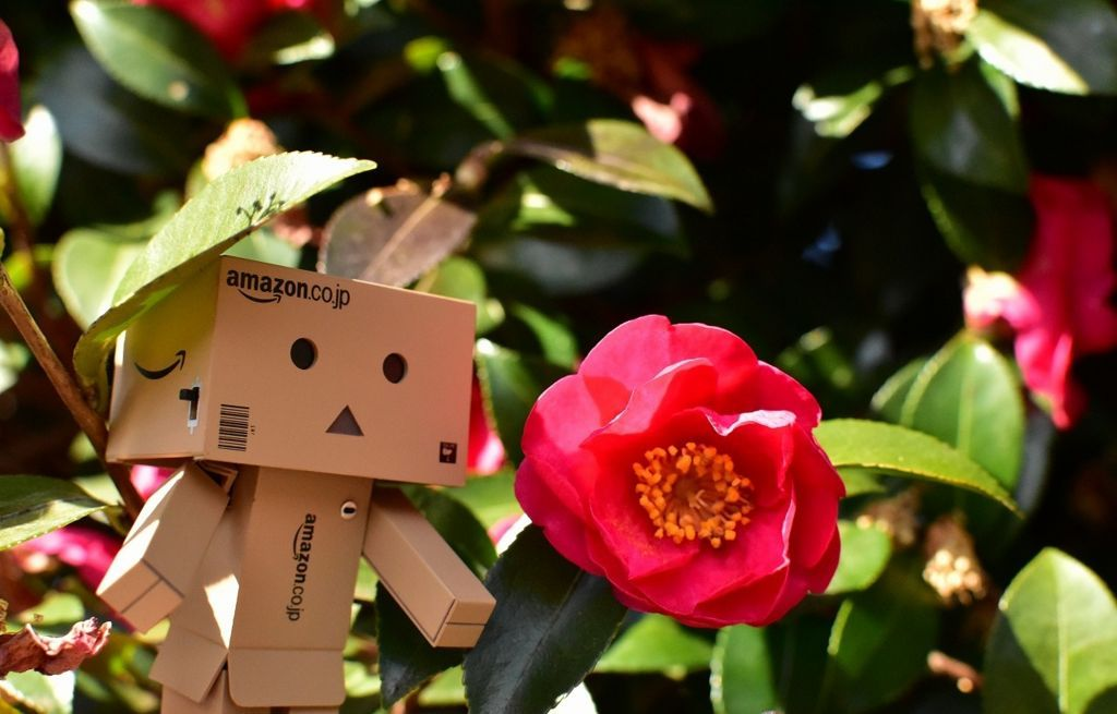 花とダンボー