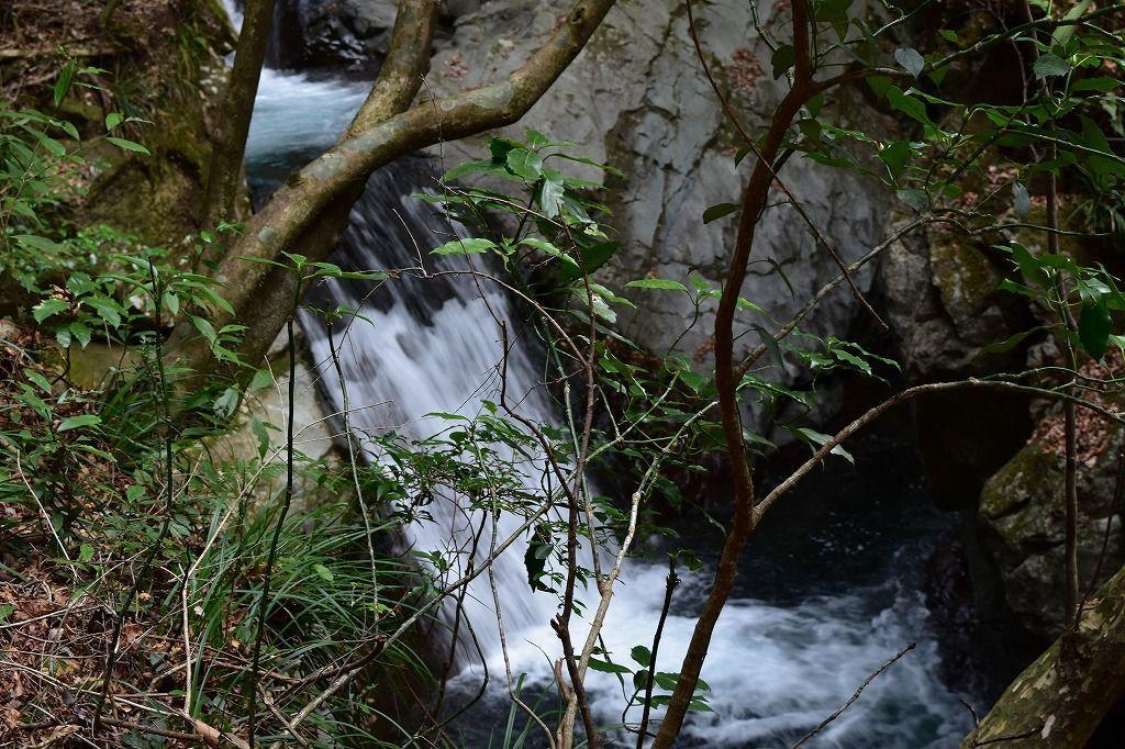 河津七滝のエビ滝