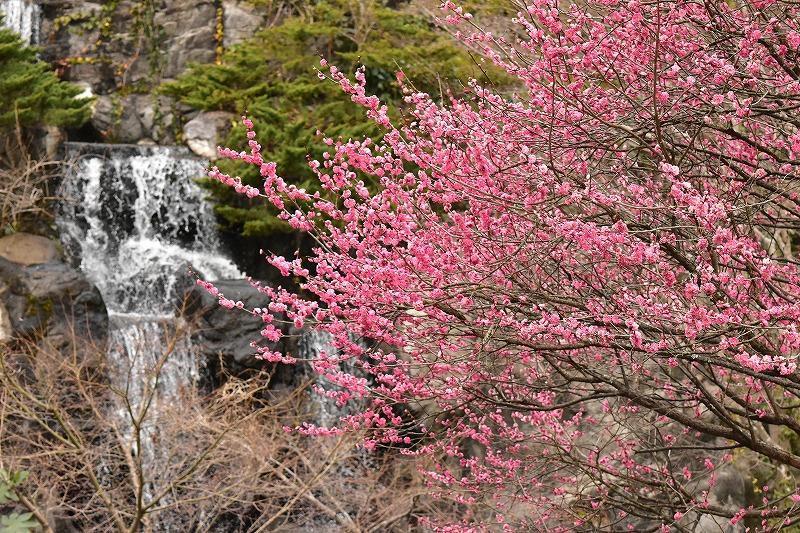 熱海梅園の梅見の滝