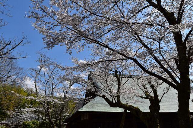 重要文化財の江川邸