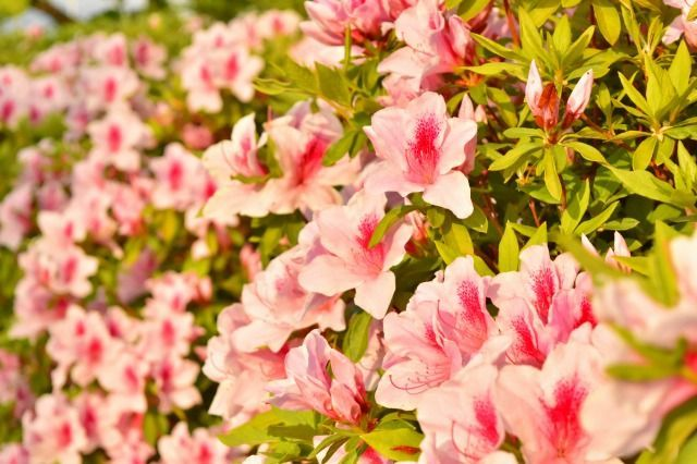 一眼レフカメラで近づいて花を撮影