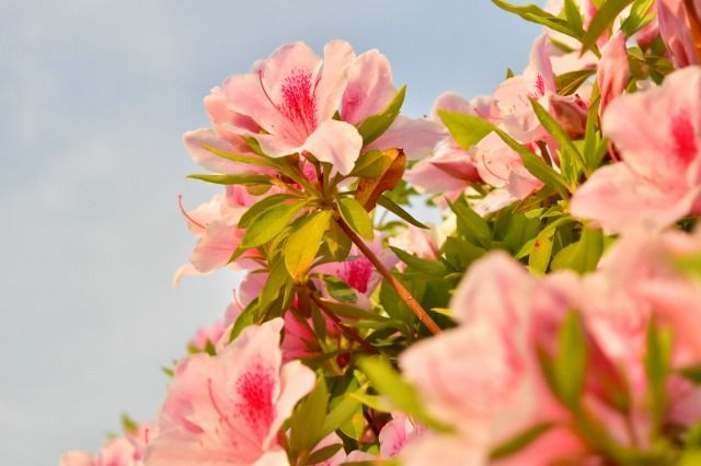 一眼レフカメラD5500で近づいて撮影した花