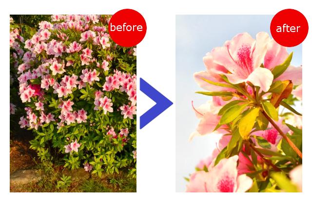 一眼レフカメラで花を綺麗に撮影するコツ