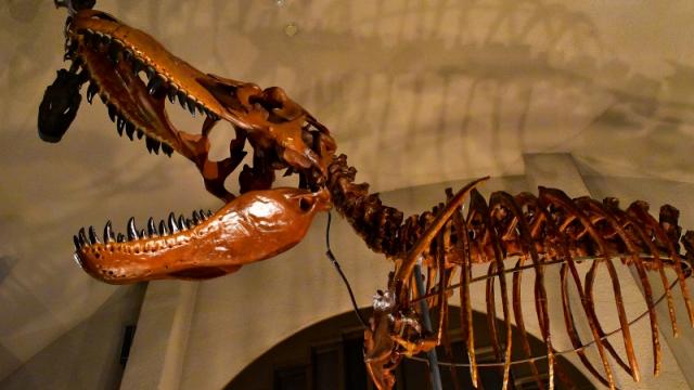 東海大学自然史博物館