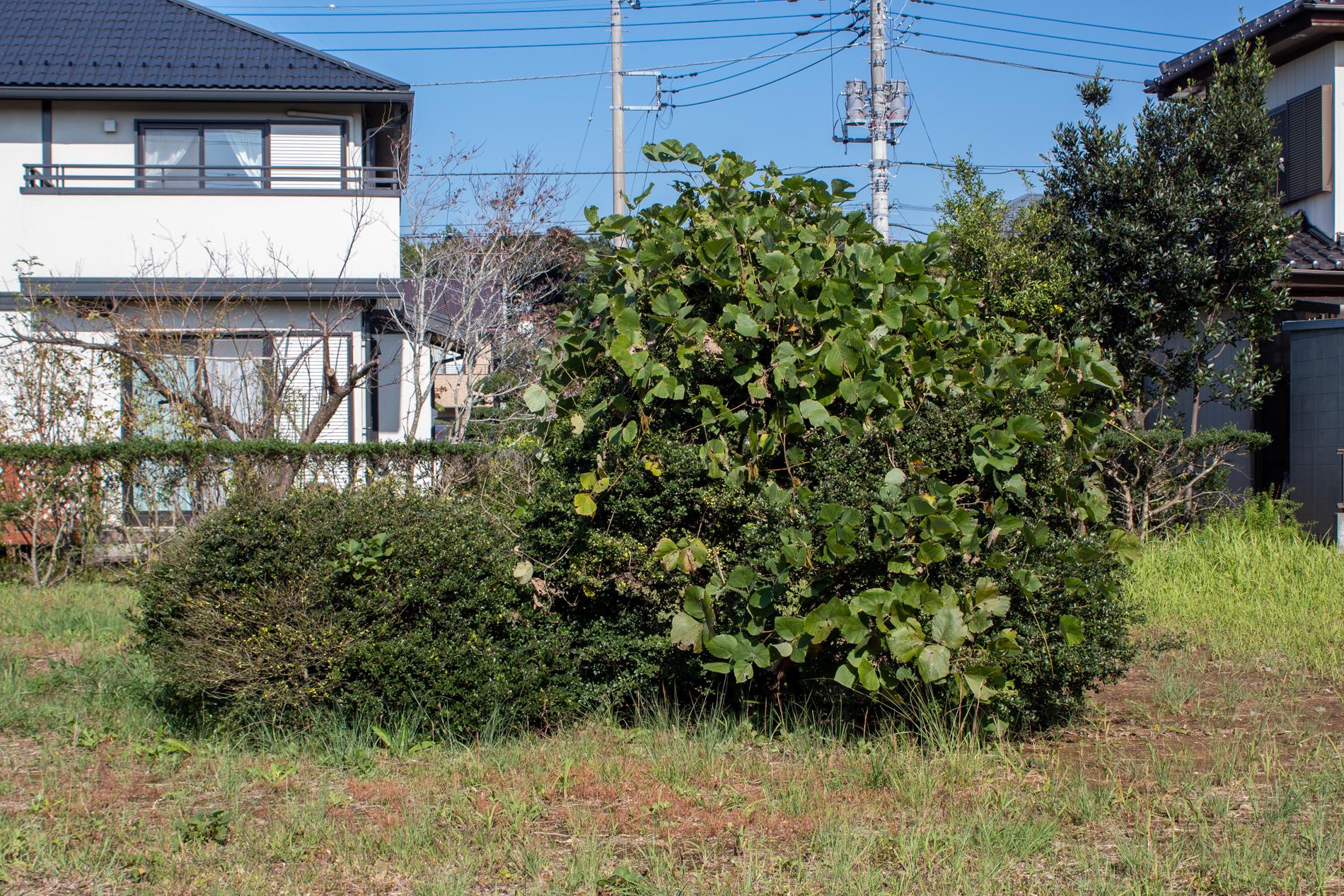f:id:akichiniiko:20200204011930j:plain