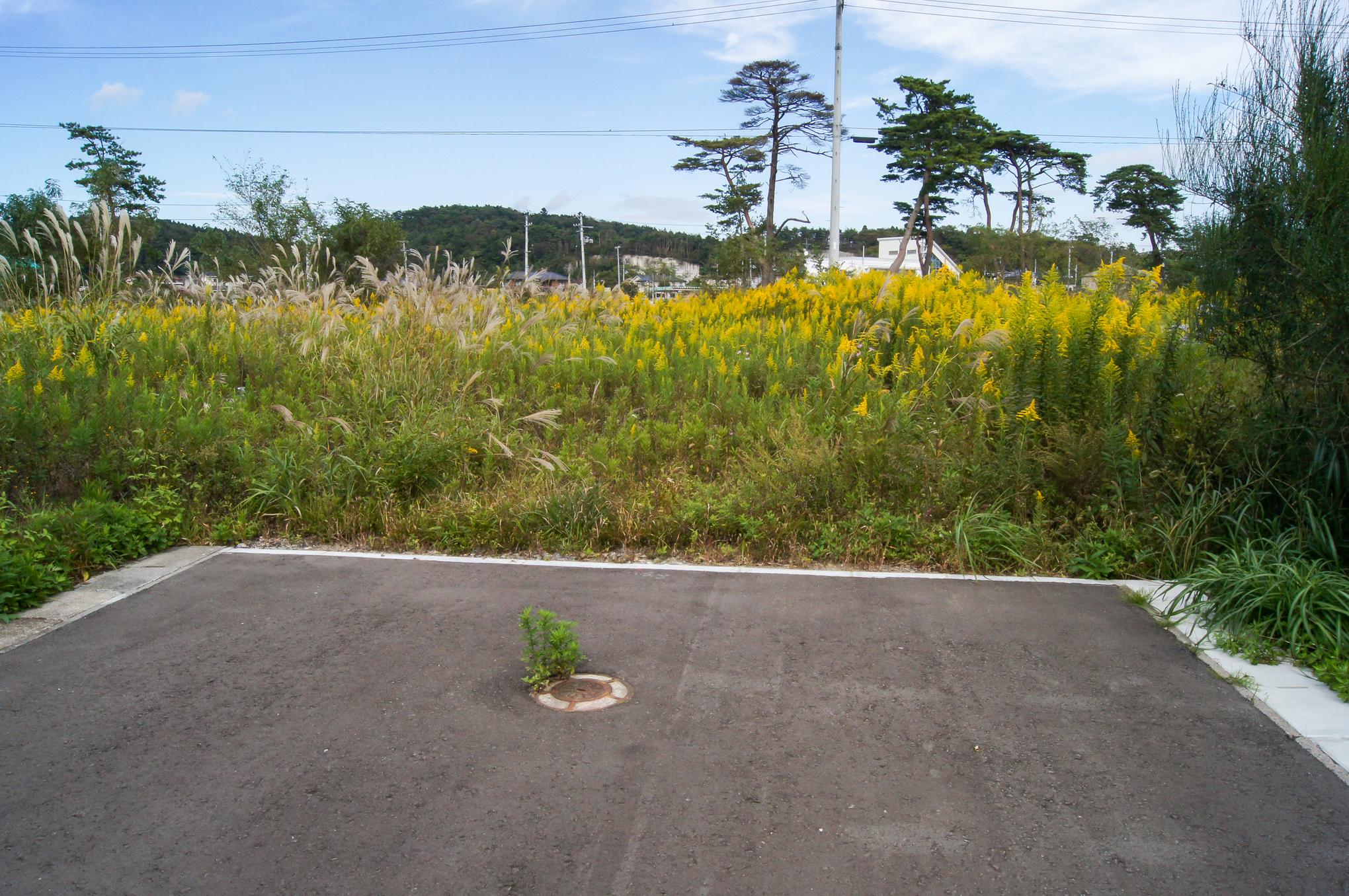 f:id:akichiniiko:20200607200453j:plain