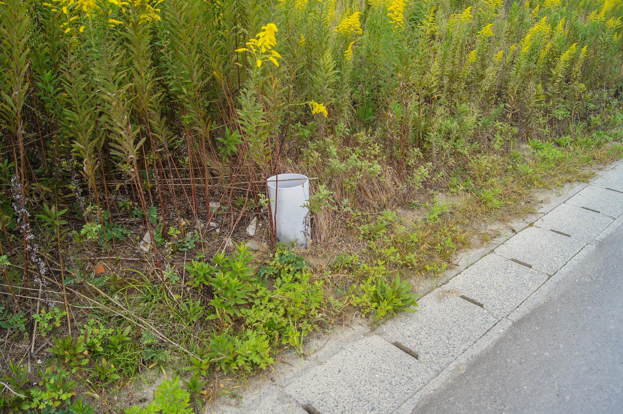 f:id:akichiniiko:20200607203625j:plain