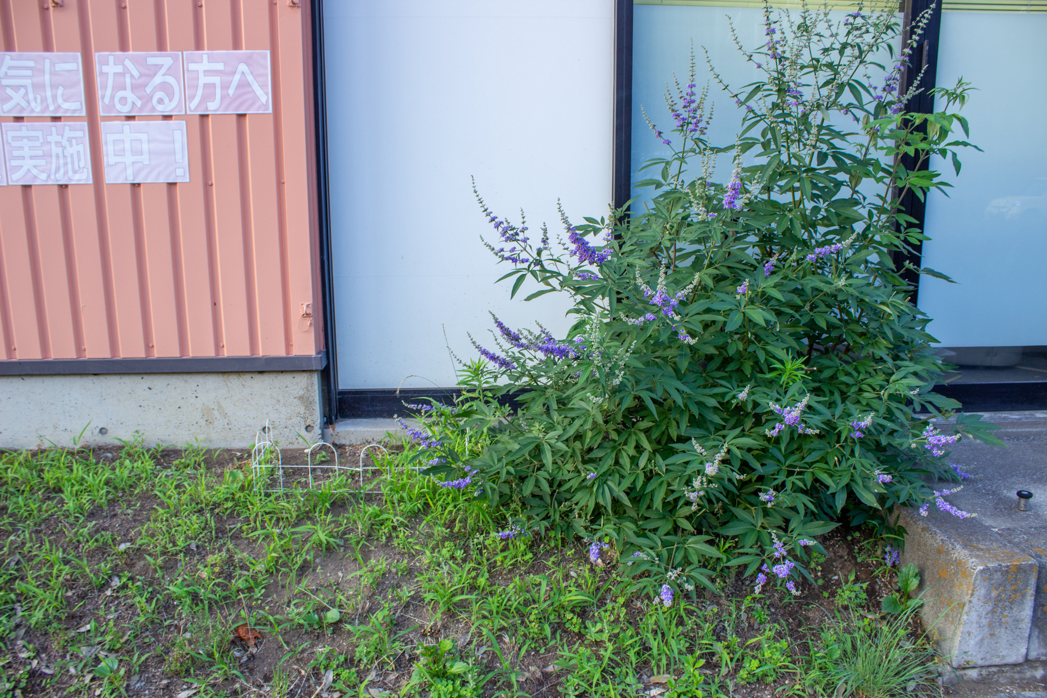 f:id:akichiniiko:20200708225235j:plain