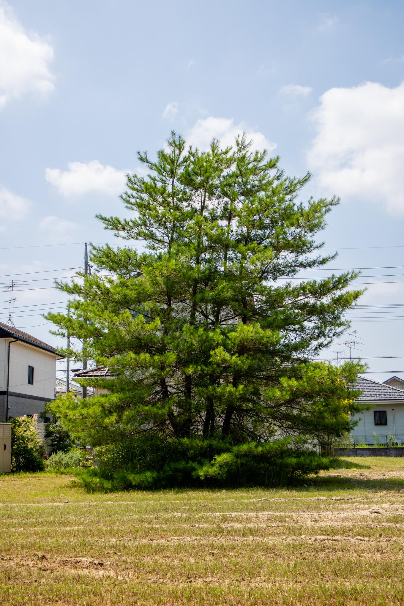 f:id:akichiniiko:20200804165912j:plain