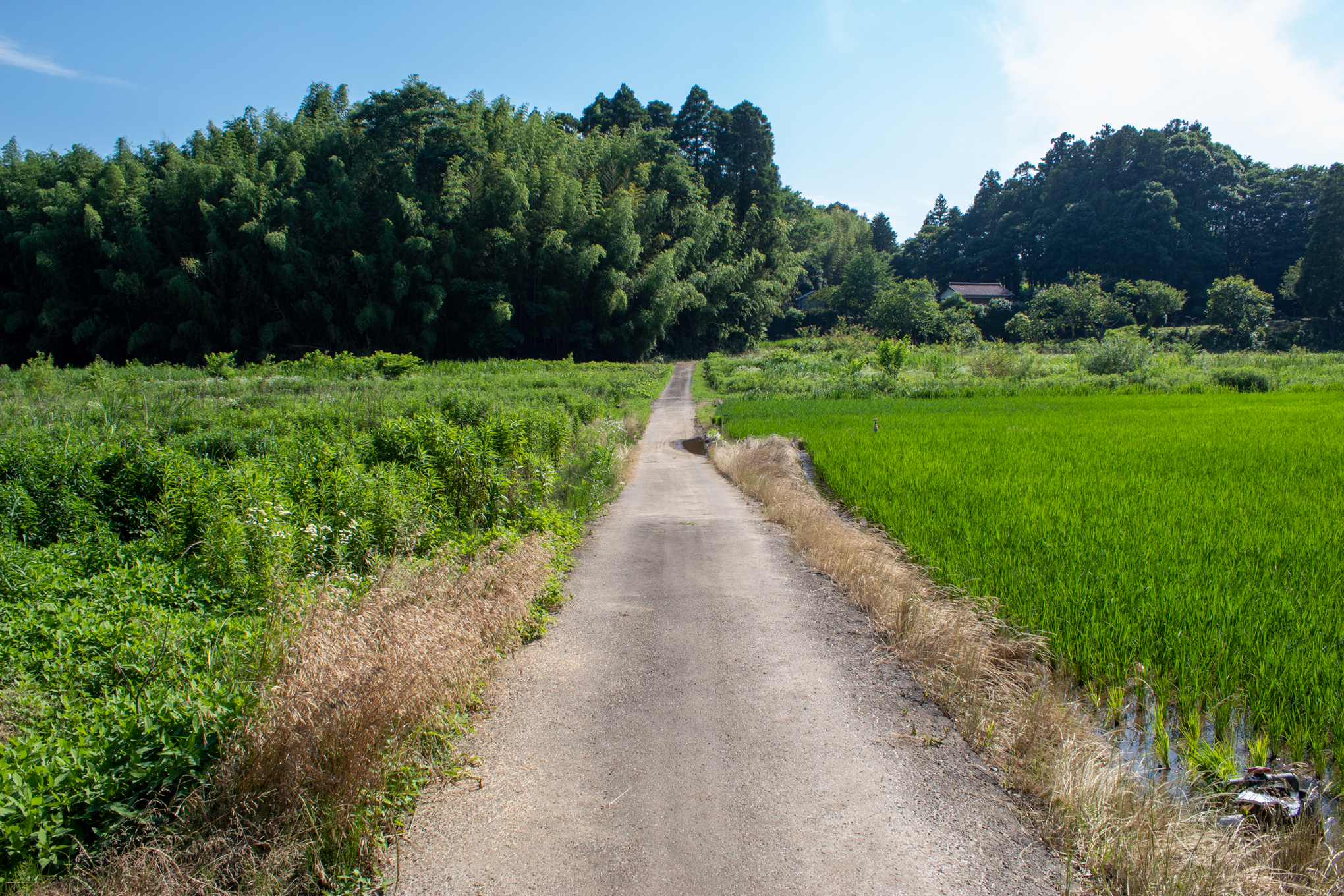 f:id:akichiniiko:20200901181144j:plain