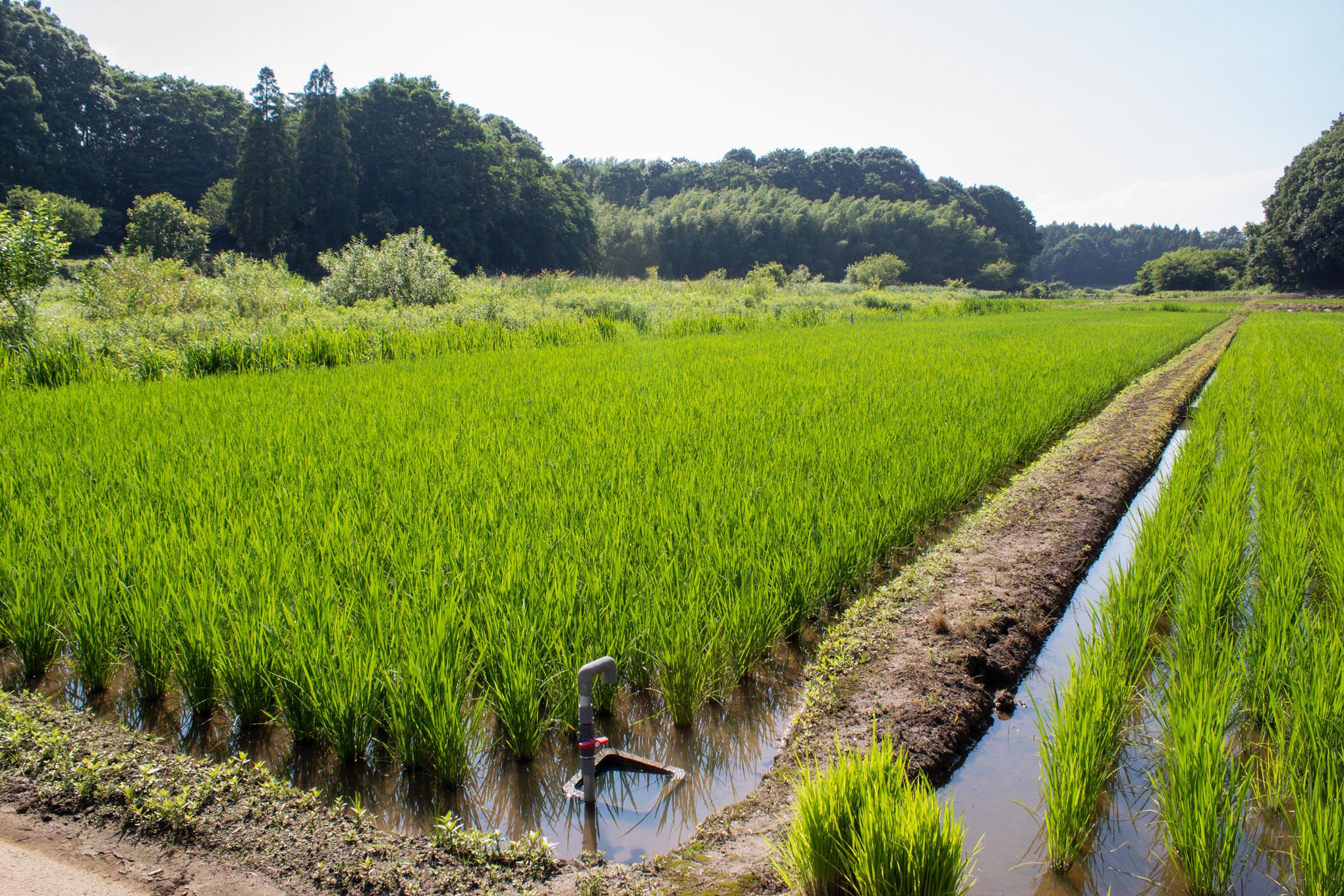 f:id:akichiniiko:20200901181151j:plain
