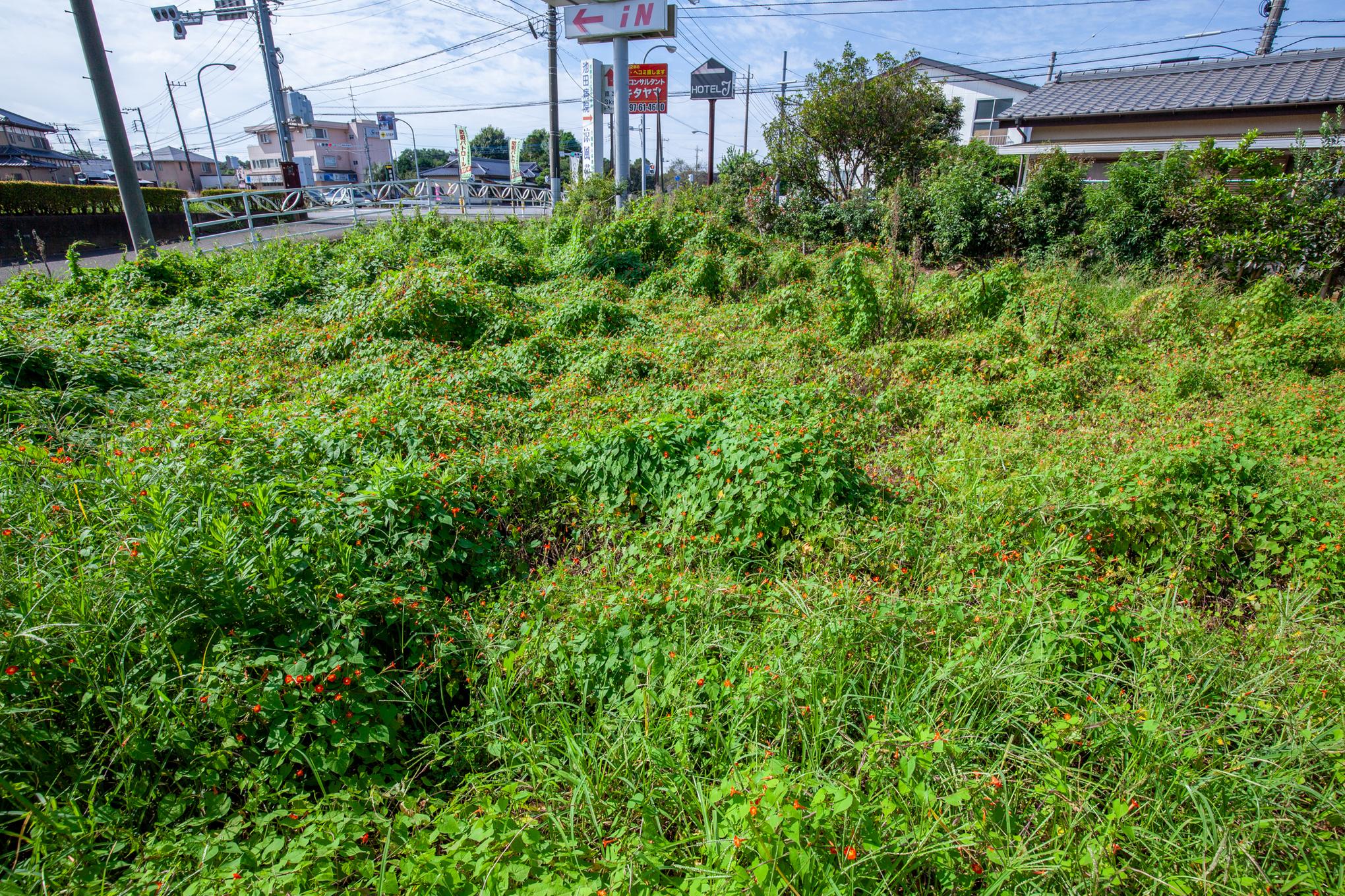 f:id:akichiniiko:20200923202620j:plain