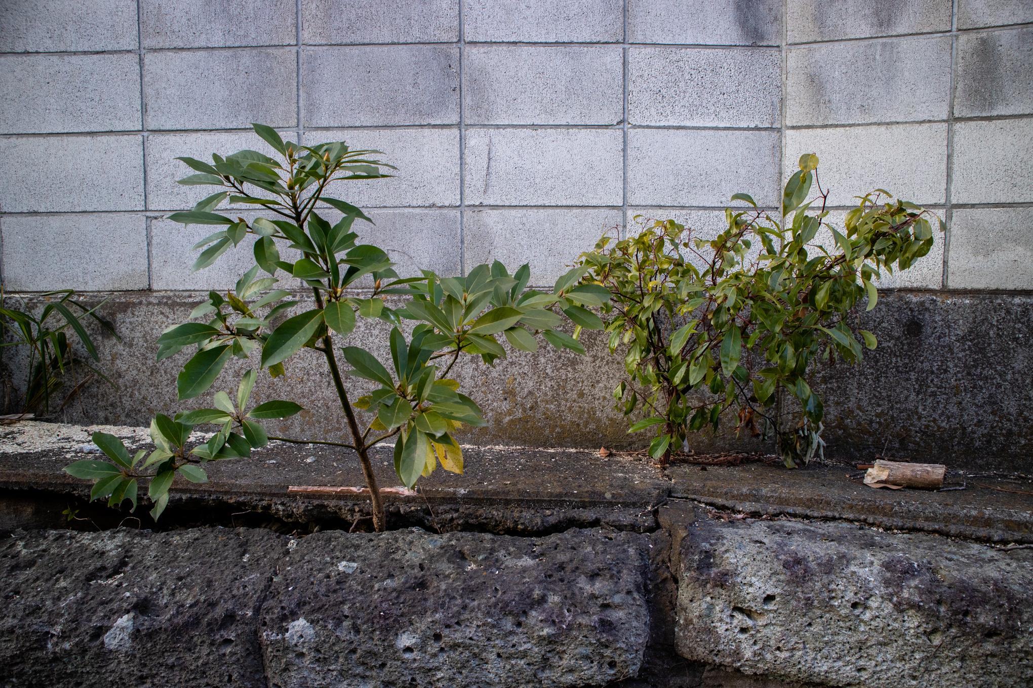 f:id:akichiniiko:20201224234741j:plain