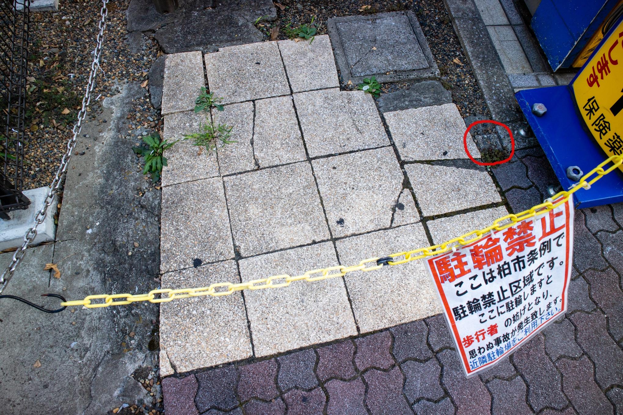 f:id:akichiniiko:20210529174948j:plain