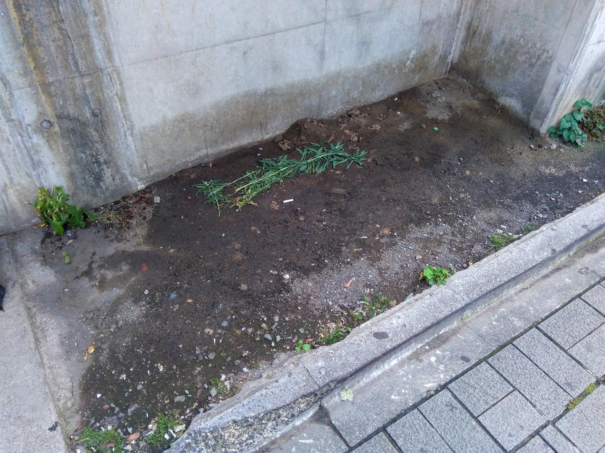 f:id:akichiniiko:20210607131648j:plain