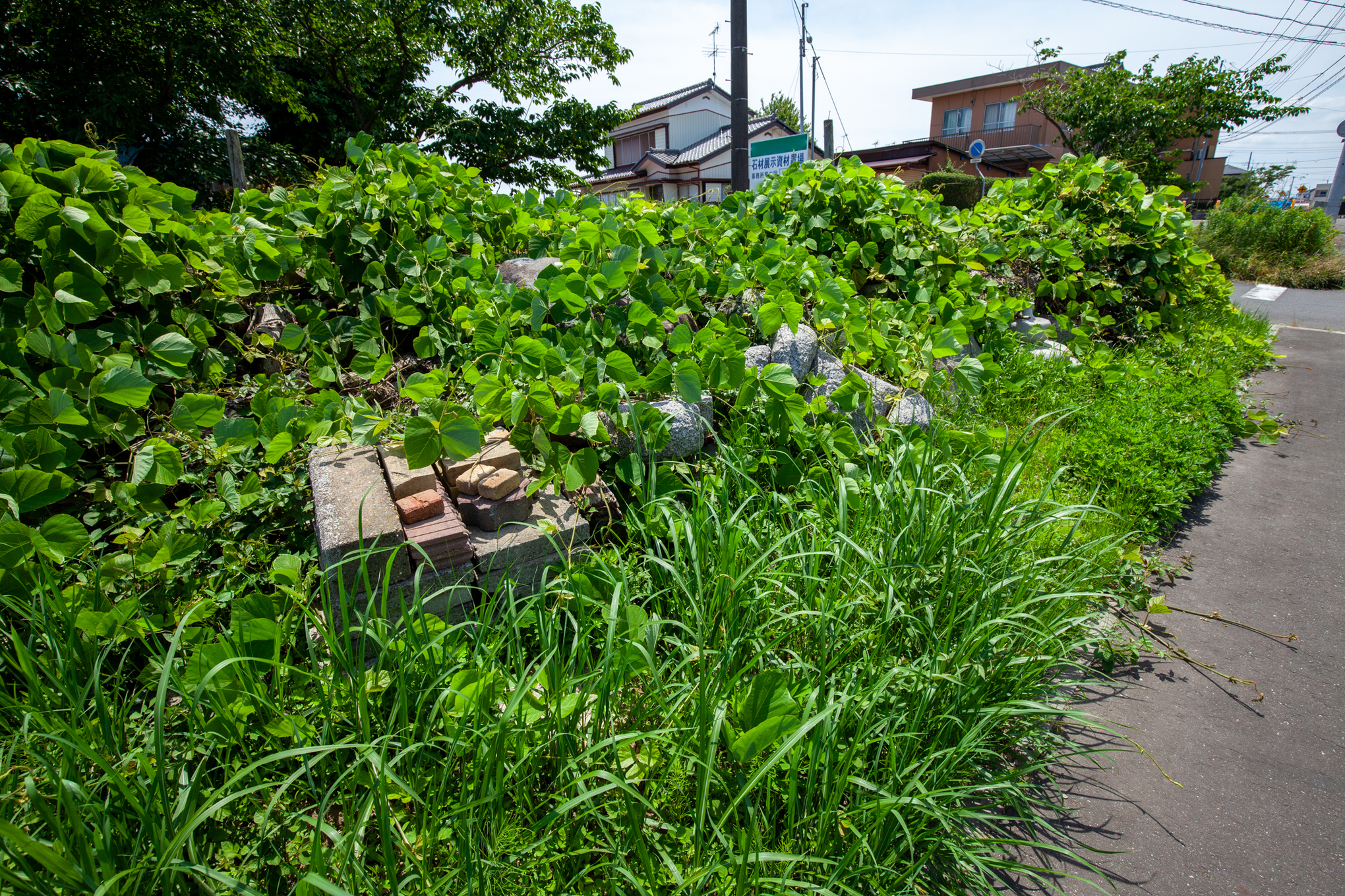 f:id:akichiniiko:20210611201037j:plain