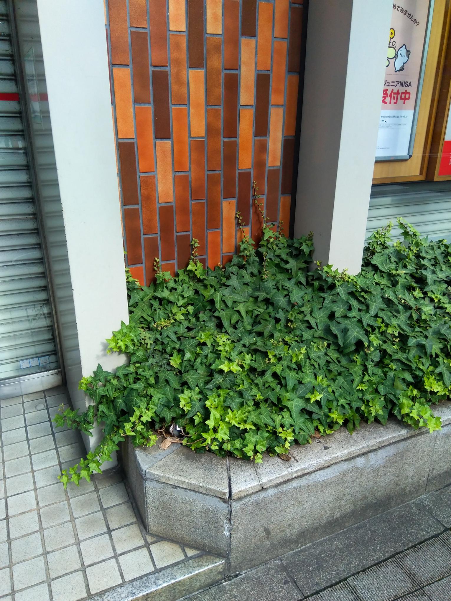 f:id:akichiniiko:20210618150527j:plain