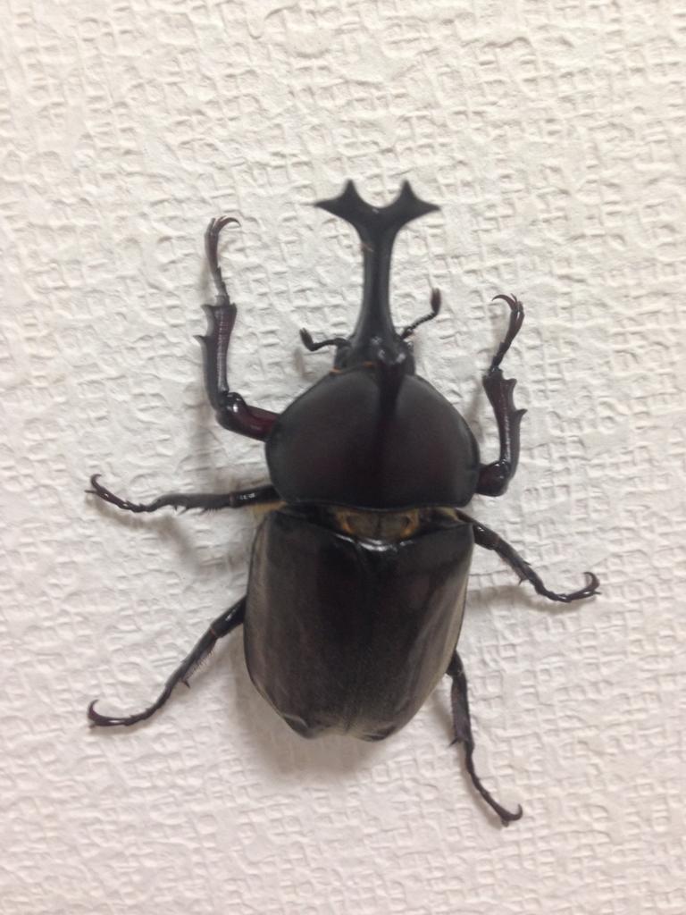f:id:akihiro5:20160721015132j:plain